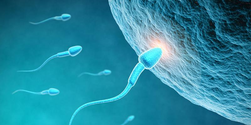 https://noelleong.com/wp-content/uploads/2021/07/rect-sperm.jpg